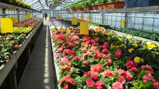 Eine offene blüte macht noch keine gesunde pflanze